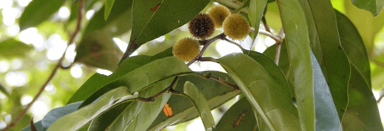 Gal-hedawaka