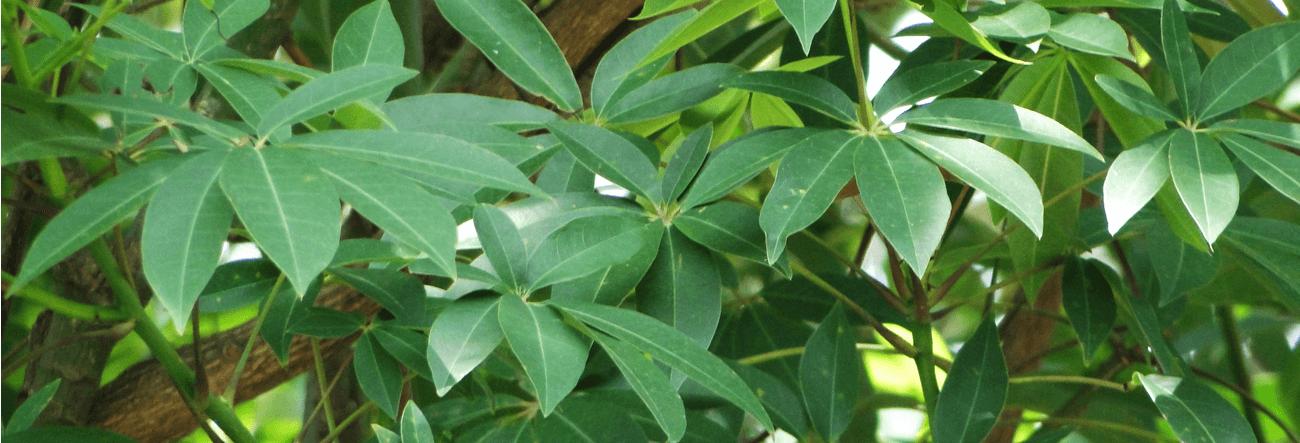 Pulun-imbul
