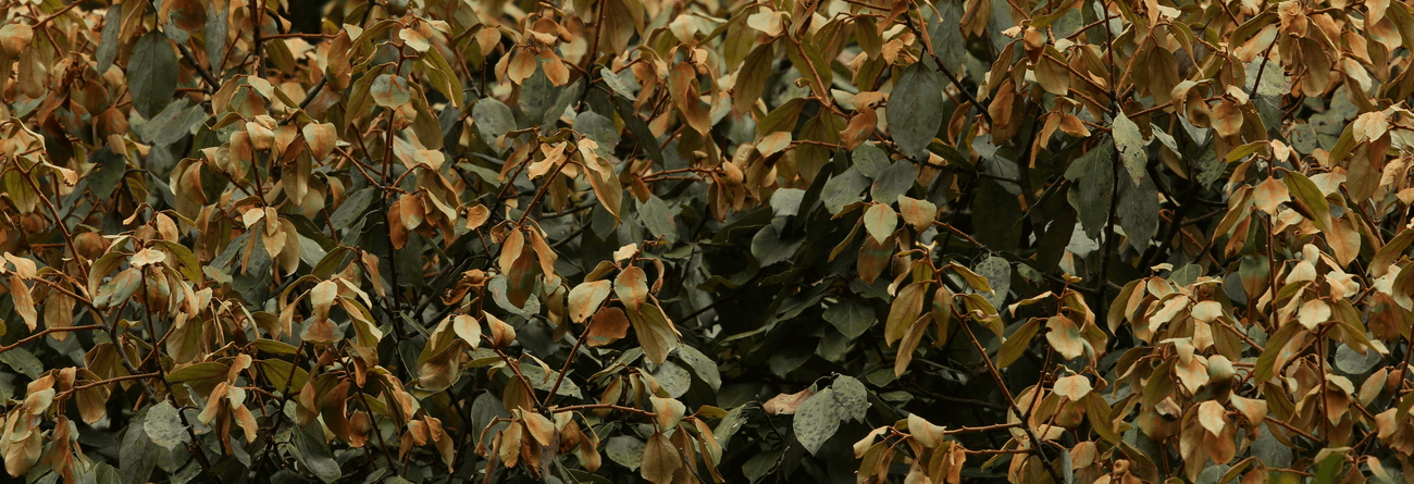 Kudu-dawula