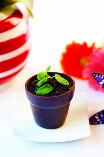 AFTER DINNER MINTS DILMAH MINT TEA INFUSED CHOCOLATE, MINT CRÉME & CHOCOLATE SOIL