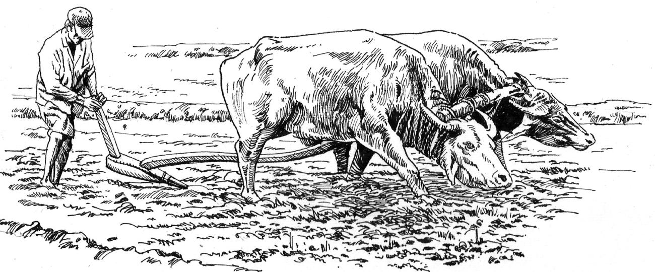 Ploughing (Nagula)