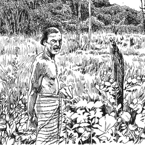 Chena Cultivation