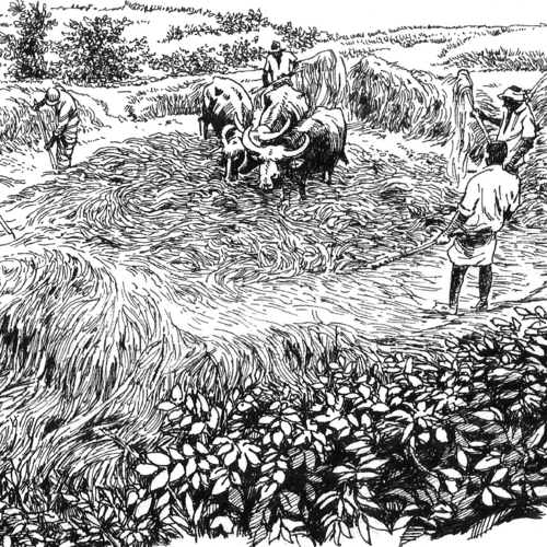 Threshing Floor (Kamatha)