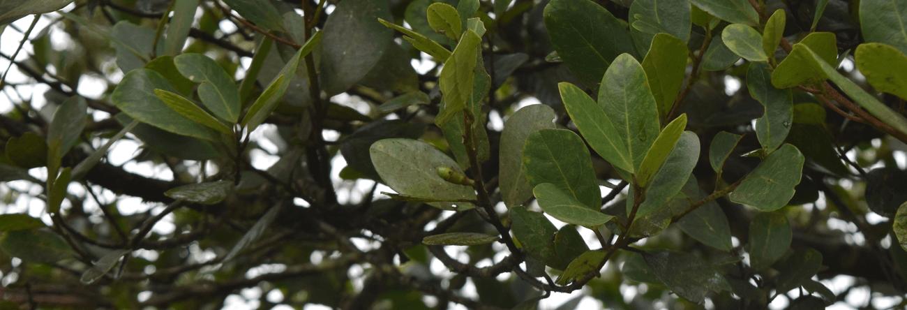 Mudupali-keliya