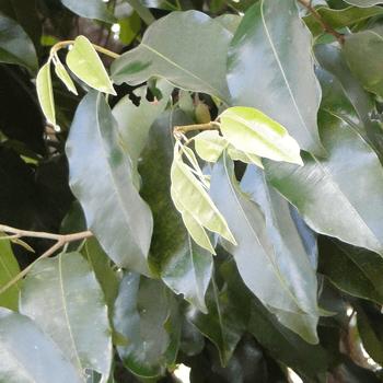 Muna-mal