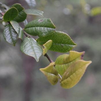 Neya-dassa