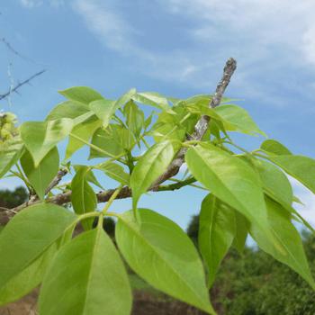 Lunuwarana