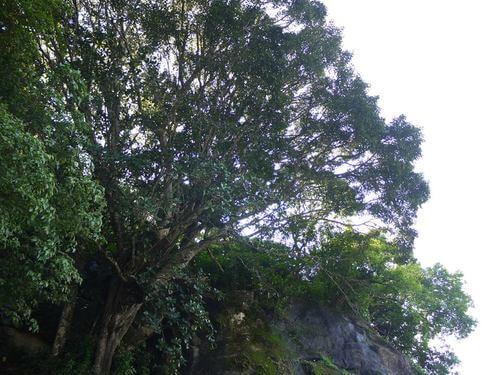 Etamburu