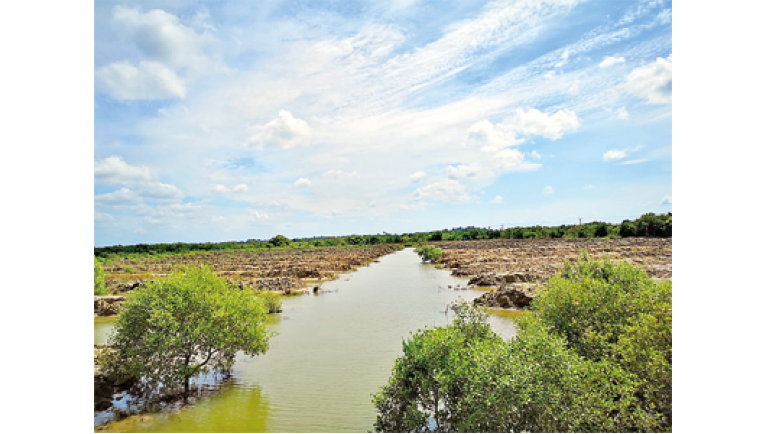 A second chance for mangroves