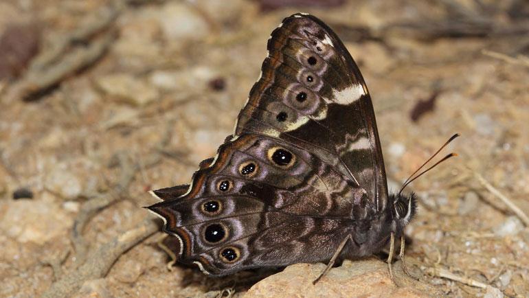 An urban 'butterfly experience' in Sri Lanka
