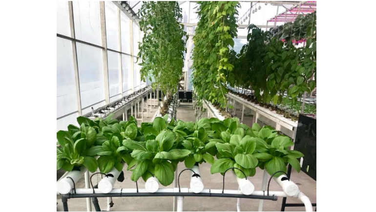 Growing Vertically: Dilmah Conservation launches hydroponics