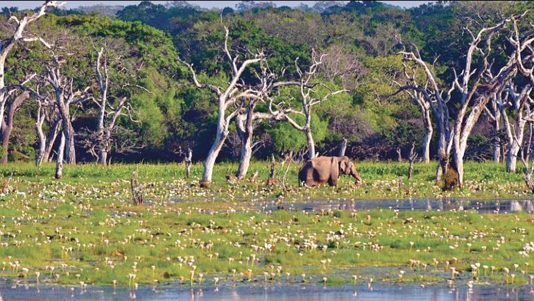 Biodiversity Sri Lanka (BSL), is celebrating its sixth year of operation. Preceding its Annual General...