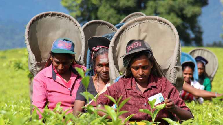 In Sri Lanka, one of the world's largest tea companies has become carbon neutral.From late...