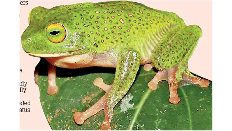 IUCN Red List Training on Amphibians