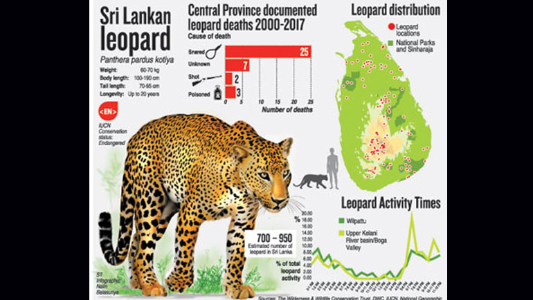 Don't frighten leopards out of existence