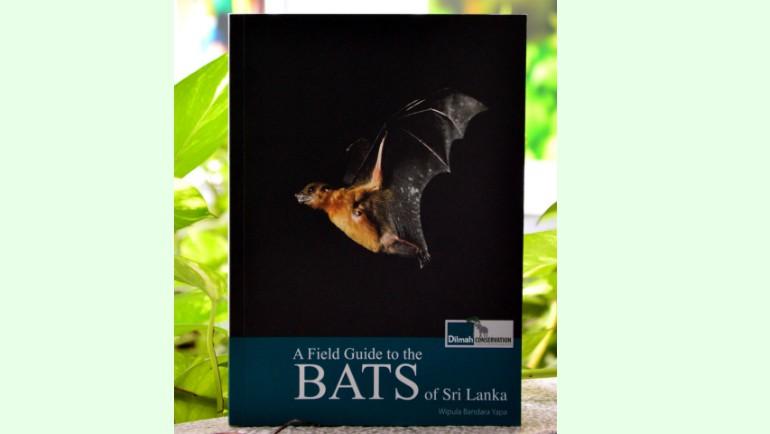 Going bats over bats