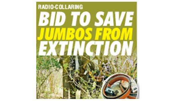 Bid to Save Jumbos From Extinction