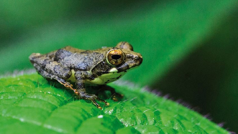 New assessment shows Sri Lanka's amphibians being pushed to the brink