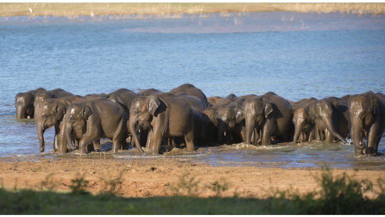 Education and Awareness Key for Strengthening Conservation