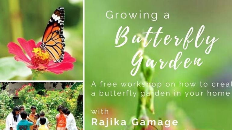 Growing a Butterfly Garden
