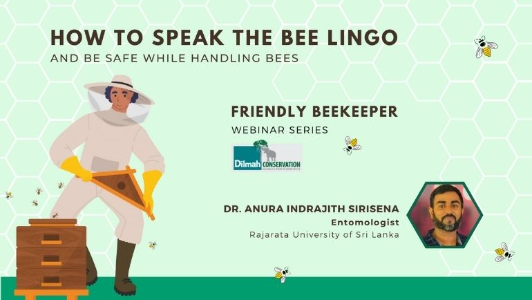 How to Speak the Bee Lingo & Safely Handle Bees