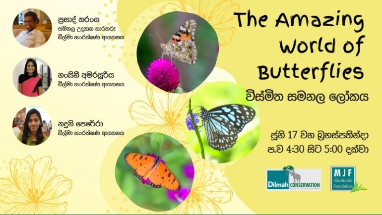 The Amazing World of Butterflies