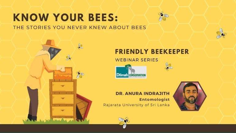 Stories you Never Knew About Bees