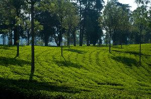 Desford Tea Garden - Copyright - ...
