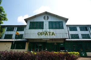 Opata Estate Silver Jubilee Oolong - ...