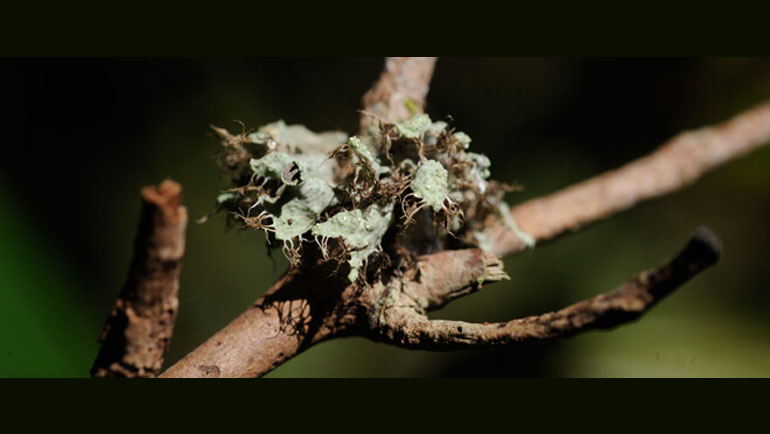 Eighty-Eight New Lichen Records and Eight Lichen Species New to Science Discovered in Sri Lanka