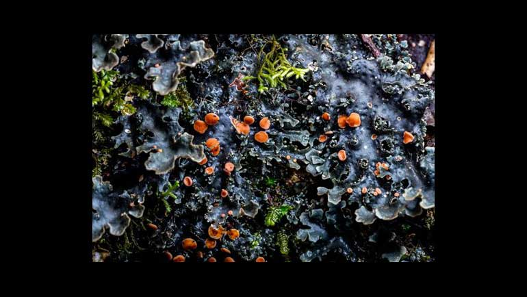 How Matthew Cicanese's Macro Images Of Lichen...