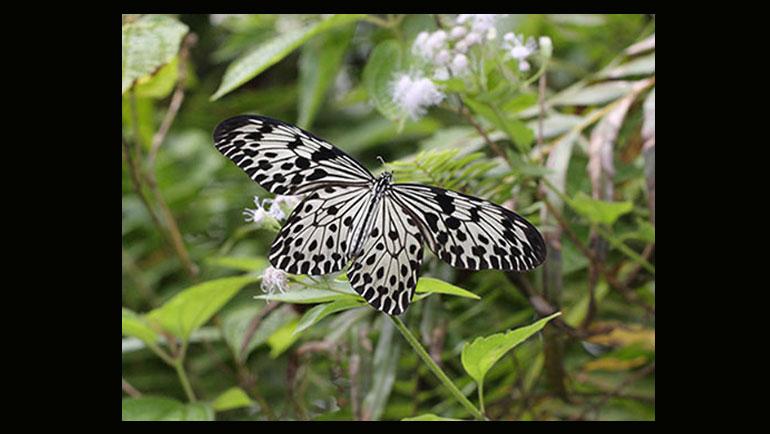 January Butterfly Workshop held