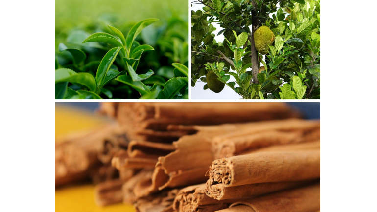 Development of Liquid-Based Tea and Its Antidiabetic...