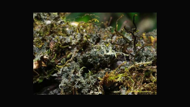 'Lichens: the coolest thing you never heard...