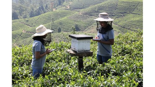 Dilmah Conservation is Building Back Better for Bees with 'Bee A Keeper'