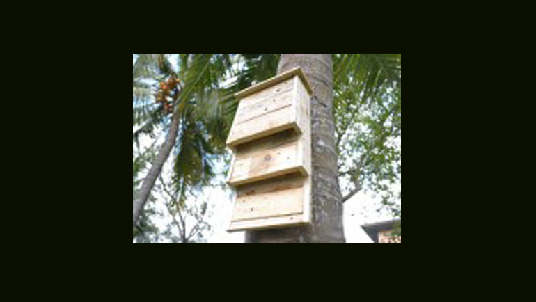Building homes for the conservation of Sri Lankan bats