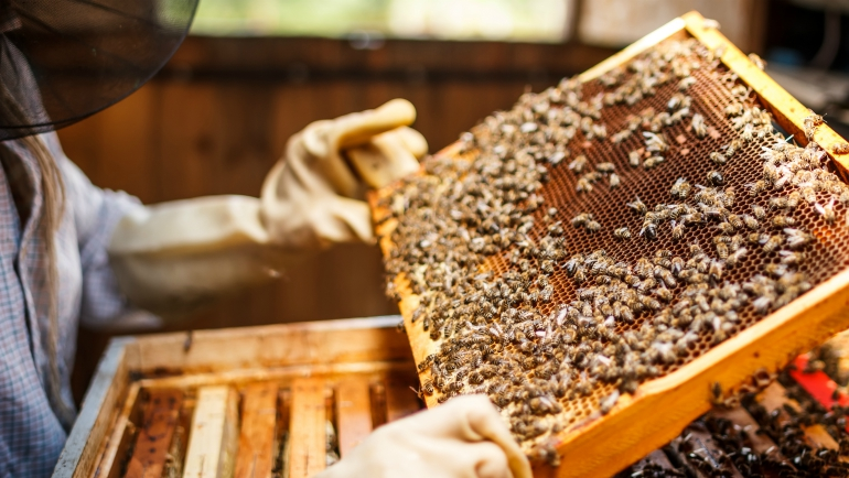 Dilmah Conservation Launches Sustainable Apiculture for the Conservation of Bees