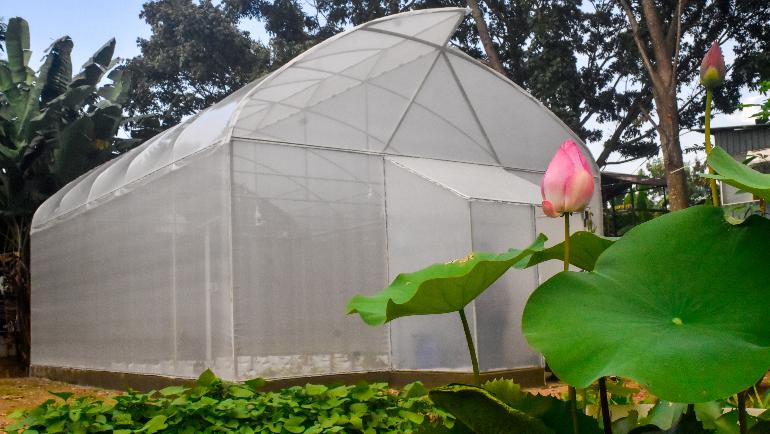 Soil-less, Vertical Farming; Growing Towards a New Normal