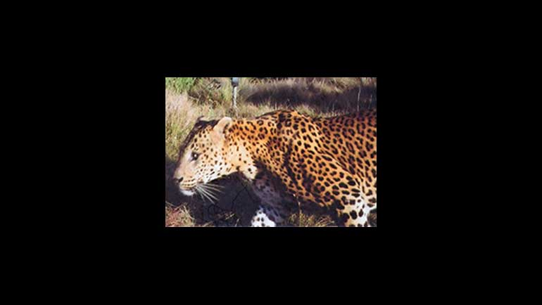Dilmah together with WWCT opens Leopard Conservation Station at Dunkeld Estate