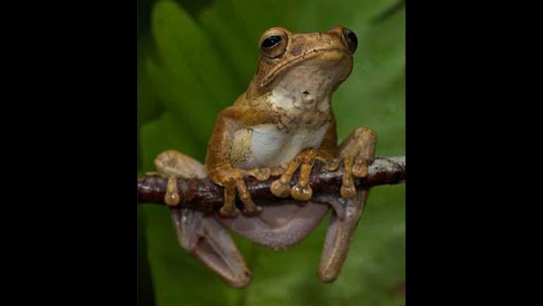 Conserving Sri Lanka's Unique Island Biodiversity