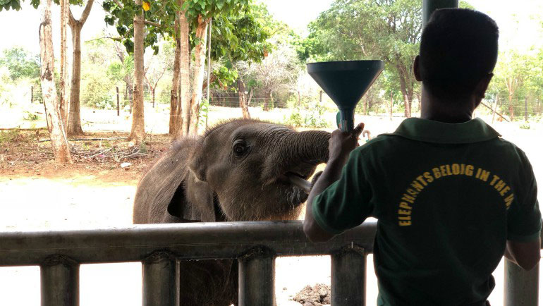 Dilmah Conservation driving Knowledge Based Elephant Conservation