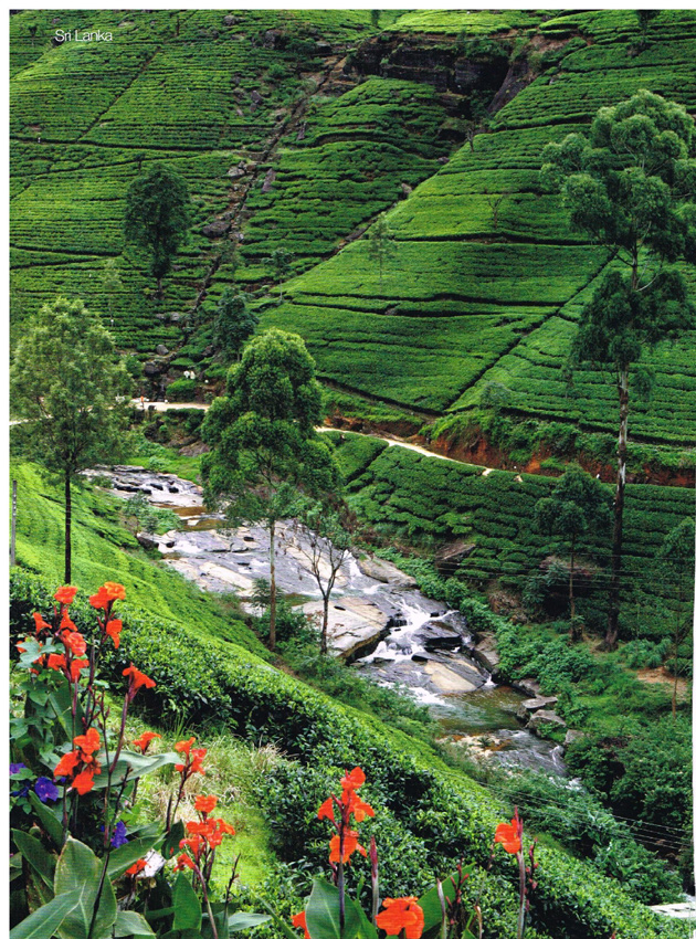 Sri Lanka: the (tea) Garden of Eden