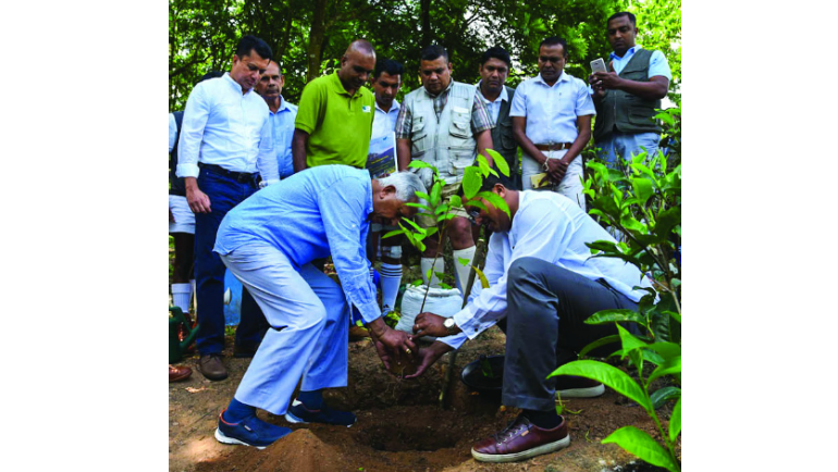 In 2018, Dilmah Tea founder, Merrill J Fernando uprooted the tea bushes at Dilmah's tea...