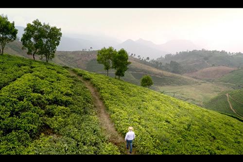 What is Merrill J. Fernando's favourite tea?