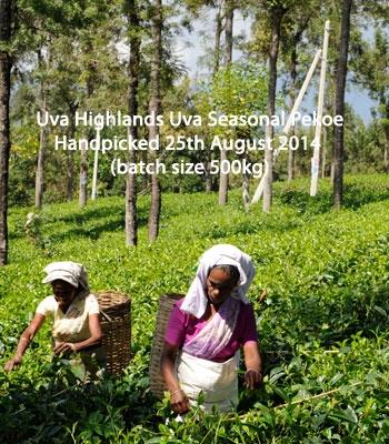 Seasonal Flush 2014 Uva Highlands Uva Seasonal Pekoe
