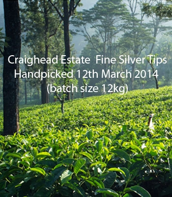 Seasonal Flush 2014 Craighead Estate Fine Silver Tips