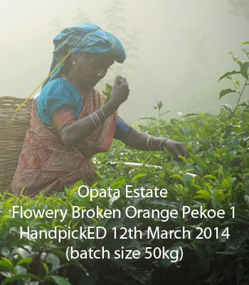 Seasonal Flush 2014 Opata Estate Flowery Broken Orange Pekoe 1