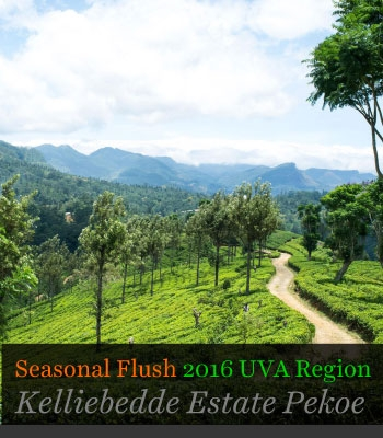 Seasonal Flush 2016 UVA Region Kelliebedde Estate