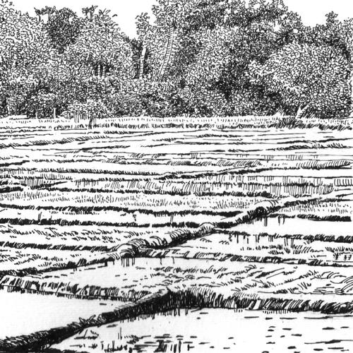 The Paddy Field (Kumbura)